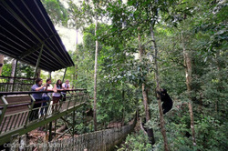 BSBCC visitor centre view of sun bear