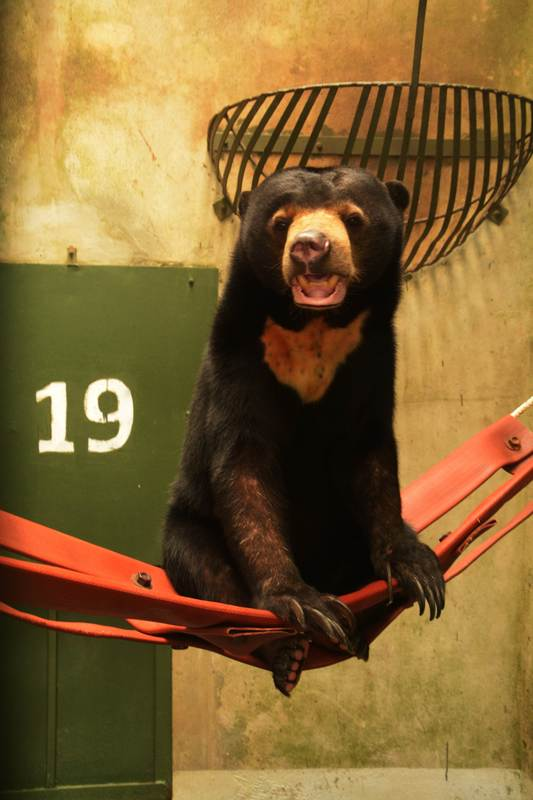 sun bear enrichment